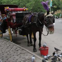 Calèche devant Central Park