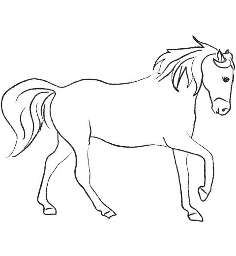 Le cheval lipizzan