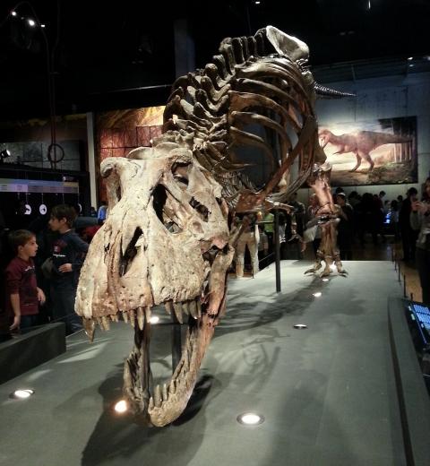 Trix,Tyrannosaurus Rex au feminin